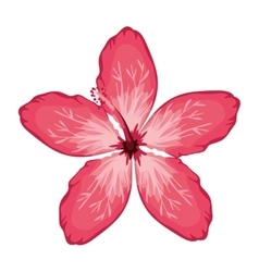 pink Chinese rose with oval shaped petals vector image
