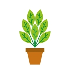 plant in pot isolated icon vector image