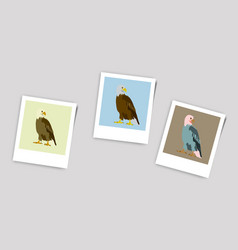 Polaroid photo of eagle vector