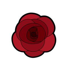 rose flower ornament floral petal nature vector image