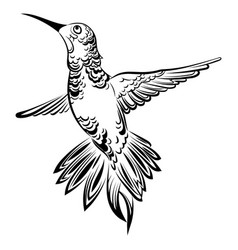 a hummingbird stylized vector image