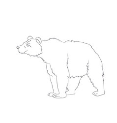 bear stands line vector image