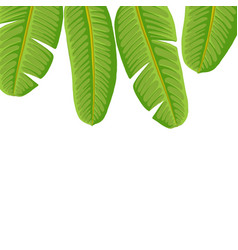 drawing tropical leaves vector image