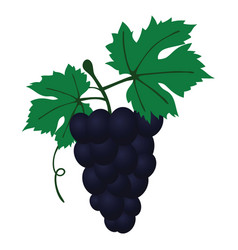 Flat design icon of grape in ui colors vector