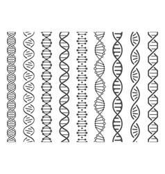 seamless dna spiral and helix structure genomic vector image
