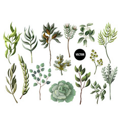 Set greenery leaves herb and succulent vector