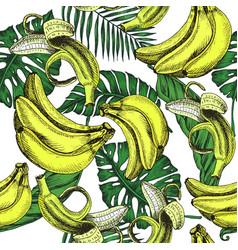 sketch background fruit vector image