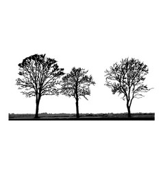 Tree silhouettes isolated on white background vector