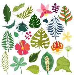 Tropical plants elements set vector