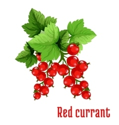 Red currant fruit cartoon icon vector image vector image