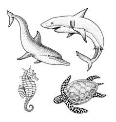 sea creature dolphin and white shark cheloniidae vector image