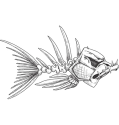sketch of evil skeleton fish with sharp teeth vector image vector image