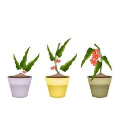 Pistachio Nuts on Tree in Ceramic Flower Pots vector