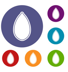 pumpkin seed icons set vector image