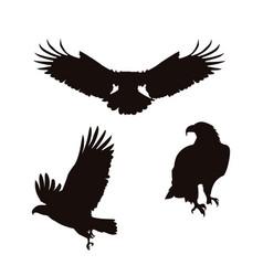 bald eagles birds silhouettes set poses vector image