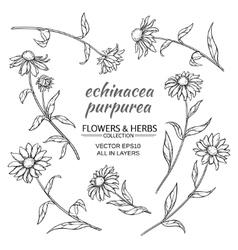 Echinacea purpurea set vector