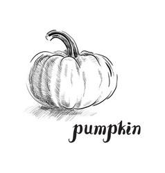 Freehand ink pumpkin vector