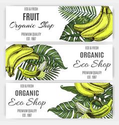 hand drawn banner banana tropical leaf vector image