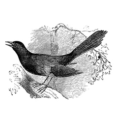 Mocking bird vintage engraving vector