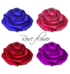 outlined blooming colored rose flowers vector image