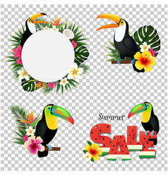 toucans set vector image