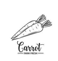 hand drawn carrot icon vector image