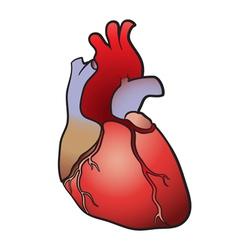 Heart color vector image vector image