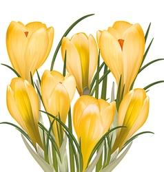 Spring bouquet of yellow crocuses vector