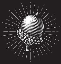 Acorn vintage engraved vector