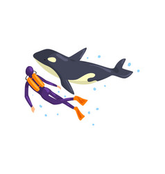 Animal trainer and orca performing in public in vector