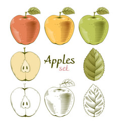 Apples set vector