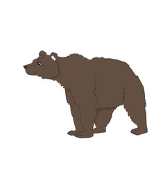 bear stands vector image