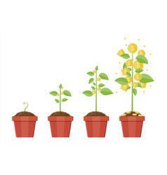 Growing money tree stages of vector