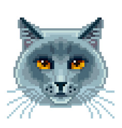 pixel british blue cat face isolated vector image