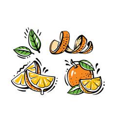set orange fruits on white background vector image