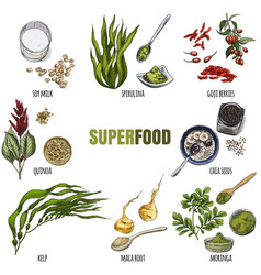 Superfood set full color realistic sketch vector