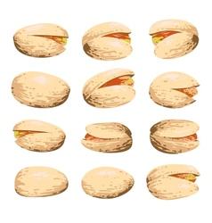 pistachio fruit set vector image vector image