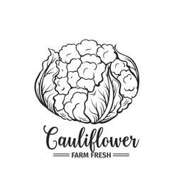 hand drawn cauliflower icon vector image vector image