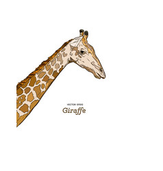 giraffe head sketch set vector image vector image