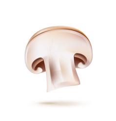 3d champignon mushroom slice realistic icon vector