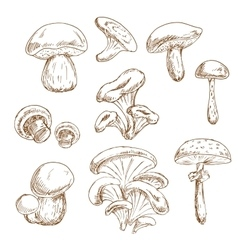 Autumnal forest mushrooms sketches set vector image