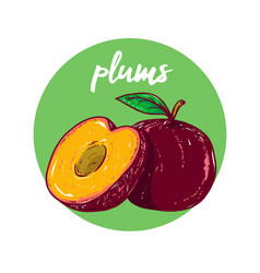 basic rgbfruit plums sketch hand drawn vector image