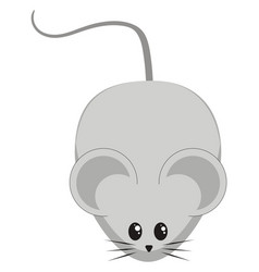 cute little mouse on white background vector image
