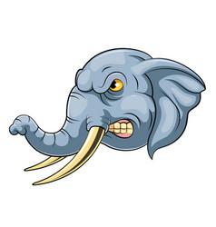 Elephant wild animal head mascot vector