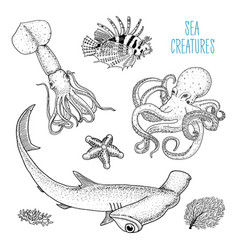 fishes or sea creature octopus and squid calamari vector image