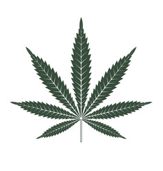 marijuana or cannabis leaf icon logo template vector image