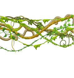 Twisted wild lianas branches banner vector