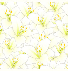 white lily flower seamless background vector image