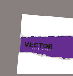 torn paper reveal purple vector image vector image