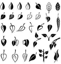 leaves set black vector image vector image